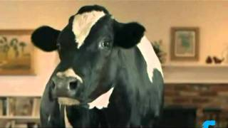 "California Milk ""Talking Cow"" Commercial"