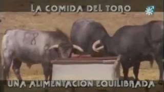 La Comida Del Toro, Una Alimentación Equilibrada