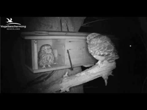 Male Feeds Female - 31.03.17