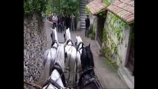 preview picture of video '5-in-hand in Campagnatico, Tuscany'