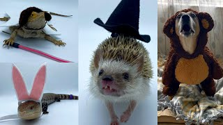 Dressing Up My Pets for Halloween!!!