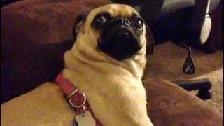 Image of: Challenge rip Vine Best And Funniest Dog Vines Gfycat Rip Vine Best Vines Free Online Videos Best Movies Tv Shows