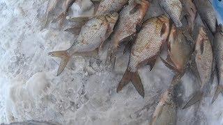 Зимния рыбалка на рузском водохранилище