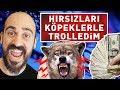 Download Video PARA HIRSIZLARINI KÖPEKLERLE TROLLEDİM ! (%100 EĞİTİMLİ)