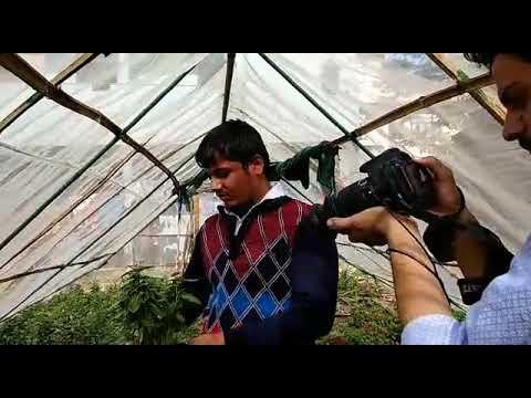 Vipin Yadav telling about Hydroponic Farming.
