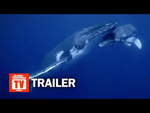 Secrets of the Whales Documentary Series Trailer | Rotten Tomatoes TV