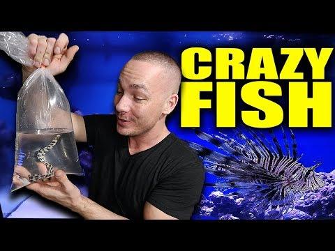 NEW FISH in the saltwater aquarium!