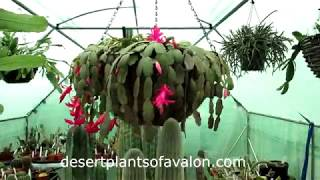 Tips on WHEN to WATER your Cacti & Succulent plants after Winter