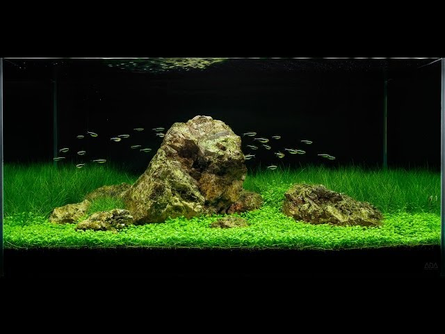 Awesome Aquascape - Underwater Landscapes - Aquascaping