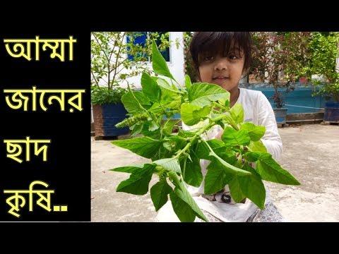 আম্মার ছাদ বাগান | সারা'র বাংলা শেখা | Gardening on rooftop | Bangla blog | Mommy With Sara.
