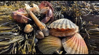 Coastal Foraging - Scallops, Cockles, Clam and Crab Beach Cook Up