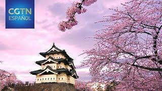 El clima cálido trae flores del cerezo y multitudes antes de lo normal