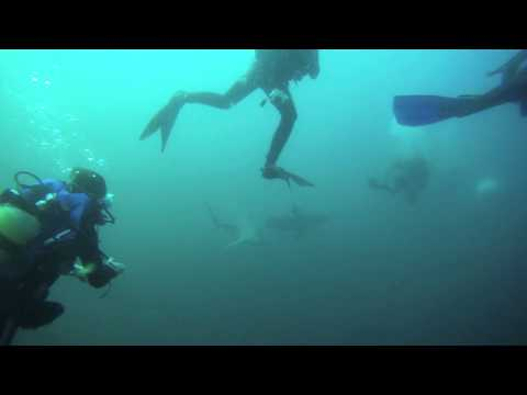 Protea Banks - Tauchgang mit Haien, Protea Banks,Südafrika