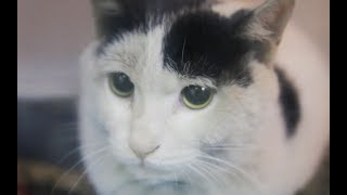 Cat owners were throwing roadside car accident, the girl salvage spend thousands of dollars