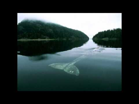 The most lonely whale ( whalien 52) - introduction - Wattpad