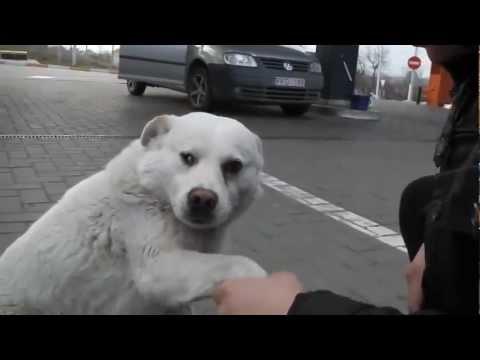 Chú chó hoang nài nỉ người lạ để xin ăn một cách đáng yêu