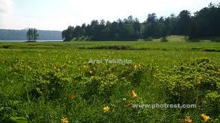 夏の大江湿原