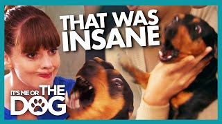 Cute Dachshund Turns Into A MONSTER Around Strangers | Its Me Or The Dog