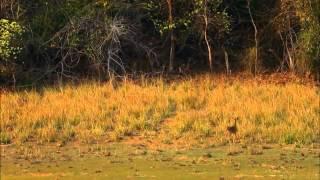 Тайны дикой природы Индии -  Хищники джунглей