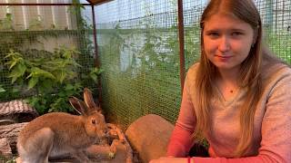 """why you shouldn't """"save"""" hares. humans and little hares. """"The house of the hare"""" part 1"""