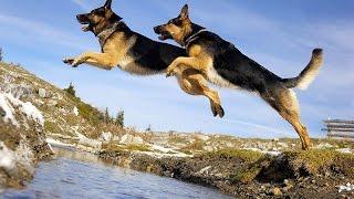 Dog Trainer Cyrus Thomas [ SAJAN DOG SCHOOL ]kottayam,pala .call 09946515222