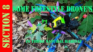A chill cruising in the woods (fpv freestyle)