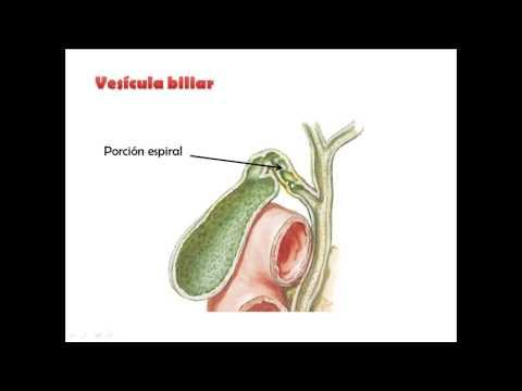 Guías de práctica clínica para la hipertensión en 2008