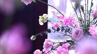 ヘルメスベルガー2世: 妖精の輪舞[ナクソス・クラシック・キュレーション #特別編:ニューイヤー]