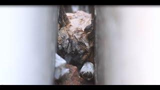 animale cainele salvat dintre ziduri