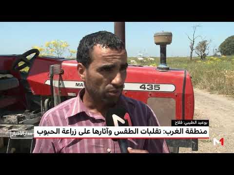العرب اليوم - تضرر المحاصيل الزراعية في منطقة الغرب المغربي بسبب الطقس