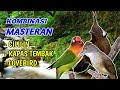 Download Lagu Masteran Kombinasi Cililin, Kapas Tembak, Lovebird Mp3 Free