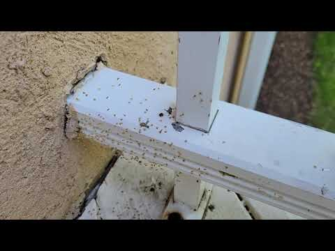 Nest of Newly Hatched Spiders on Front Porch...
