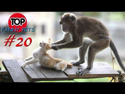 Лучшие приколы март 2019, топ смешных видео с котами, собаками. Смешные животные со всего мира! Смешные кошки,...