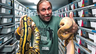 MOVING MY ENTIRE BALL PYTHON COLLECTION!! | BRIAN BARCZYK by Brian Barczyk