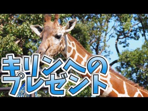キリンへのプレゼントを頂きました We received a gift to our Giraffe