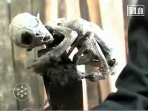 Alien Baby Found in Mexico – Aliens on Earth