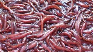 Ponds Structure for Catfish Hatchery - part 2   Travel Tride