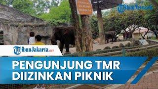 Pengunjung Taman Margasatwa Ragunan Boleh Piknik Sambil Lesehan Hanya di Area Khusus