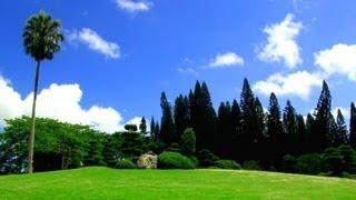 Смотреть онлайн Релакс: Кадры и моменты прекрасного лета