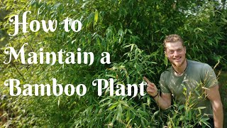How to Prune/Maintain BAMBOO plants and keep them under control
