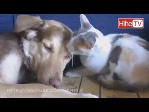 Funny Pets &  Animals Compilation – September 2014