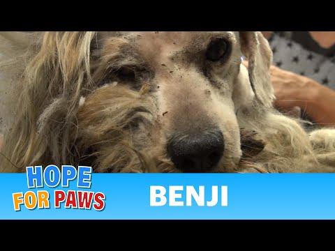 Tente não chorar se for Capaz ...Foi um cão de rua durante toda a vida. Quando cortam rente os pelos… a transformação é inacreditável