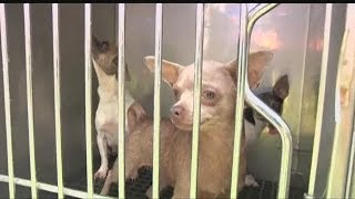 Dogs rescued in North Fort Myers