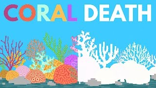 What Happens If All The Coral Dies?