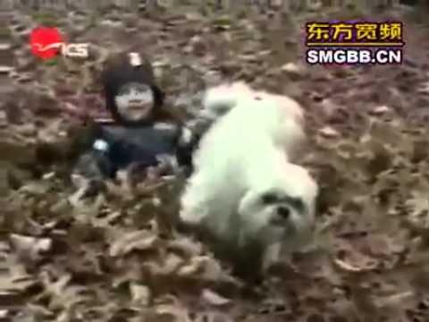 על כלבים ואנשים - אוסף פספוסים מצחיקים