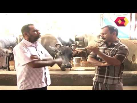 Bhoomigeetham | Cattle farming |  Part 1