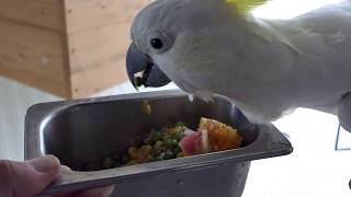 Feeding my Feathered Workmates (Parrots, Ostriches, Emus, Pheasants, Swans and more...)