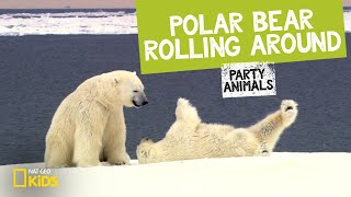 Polar Bear Rolling Around feat. Parry Gripp (Music Video) | PARTY ANIMALS PLAYLIST