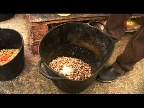 Reportaje : La comida de los caballos, turf por Maspalomas