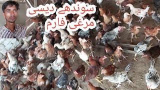desi murgi poultry farm - मुफ्त ऑनलाइन वीडियो
